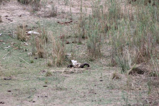 Skull in Lower Sabie