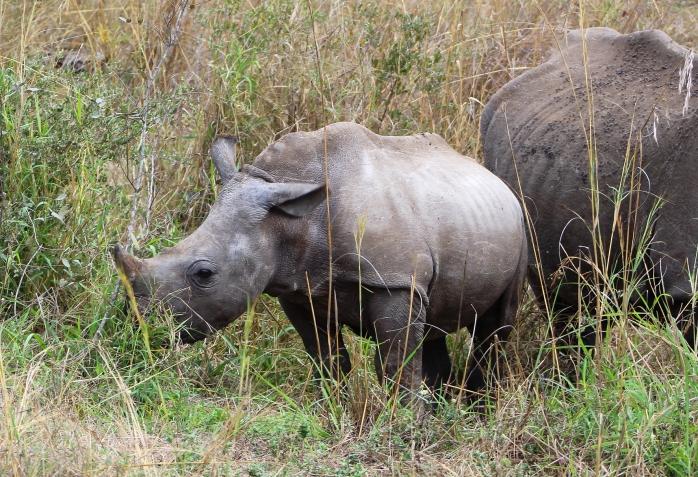 Rhino 300dpi1