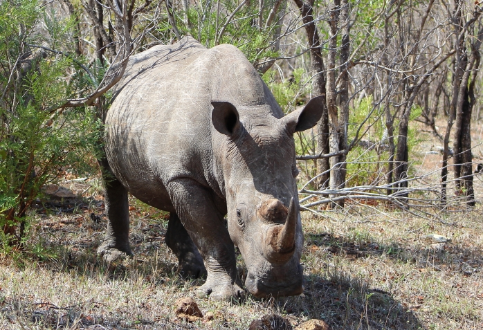 Rhino 300dpi4