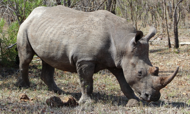 Rhino 300dpi5