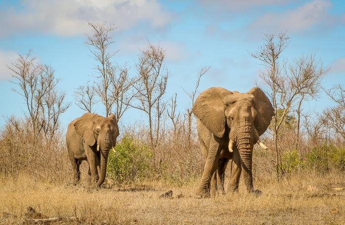 Elephant bush-2