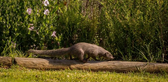 Kirstenbosch-11