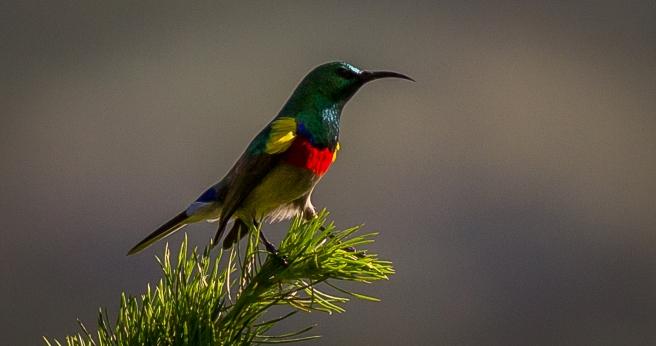 Kirstenbosch-12