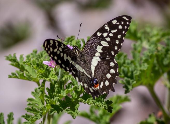 Kirstenbosch-19