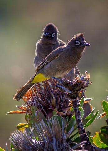 Kirstenbosch-23