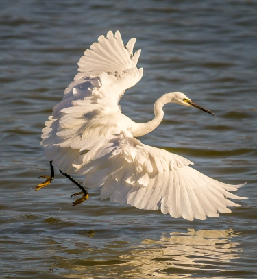 Egret Fishing-17