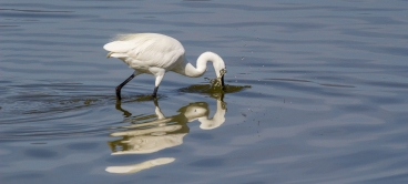 Egret Fishing-22