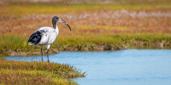Wetland observer