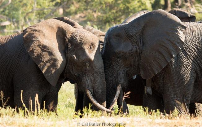 elephants-8