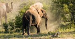 elephants-9