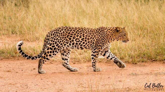 Nandzana Leopard-2