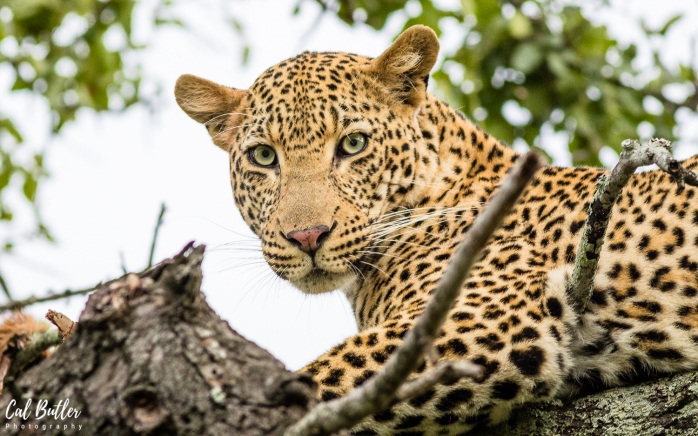 Leopard Hills-1.jpg
