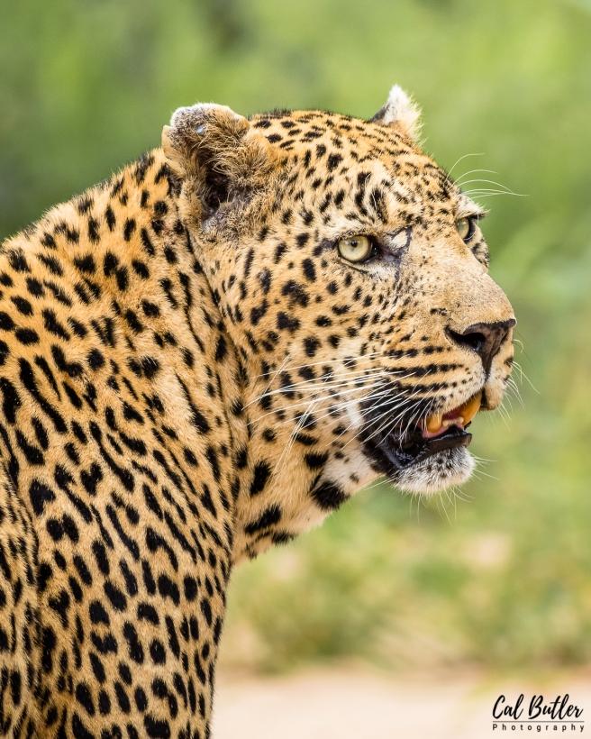 Leopard Hills-10
