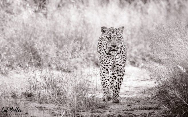 Leopard Hills-3