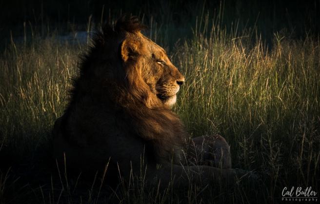 Leopard Hills-7.jpg