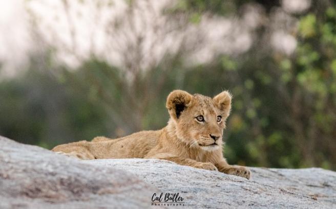Othawa Cubs-1