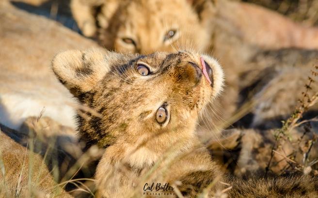 Othawa Cubs-4
