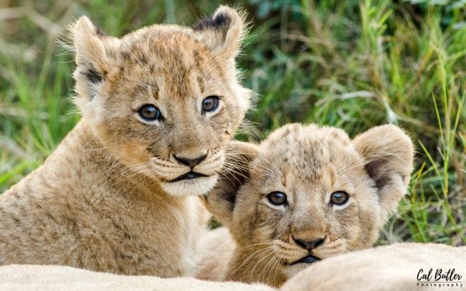Othawa Cubs-5