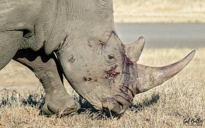 Rhino-3