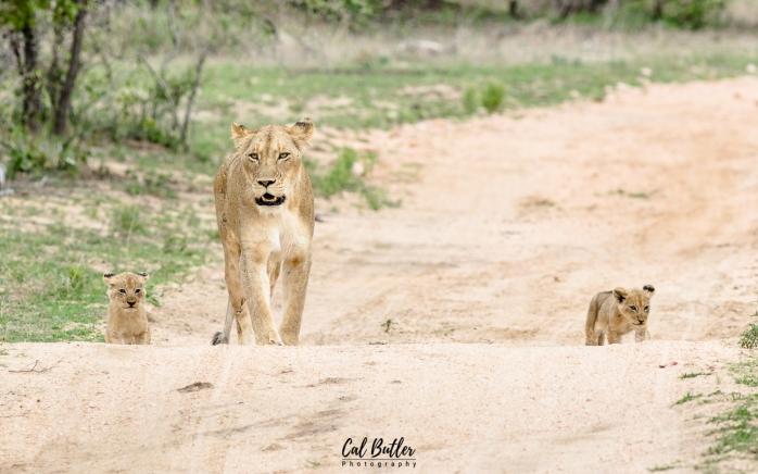 othawa cubs-3