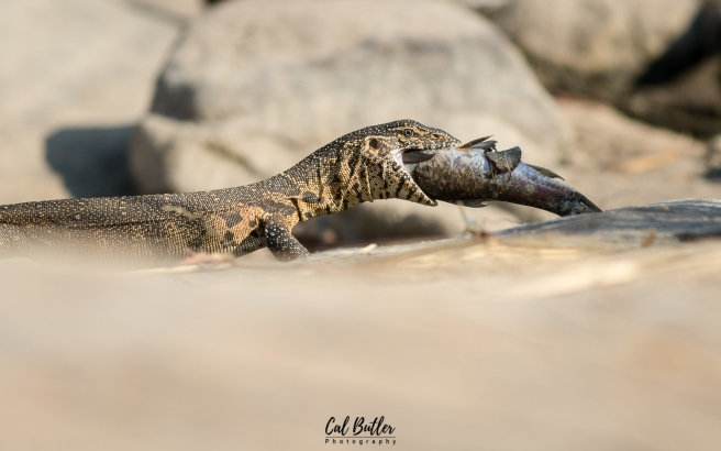 Water Monitor-1